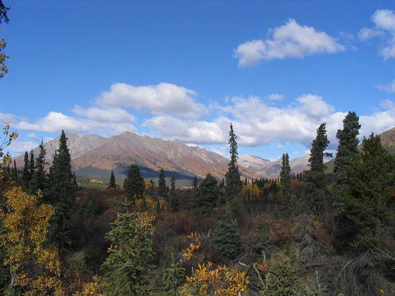 photo: Jo Ohara Wikimedia